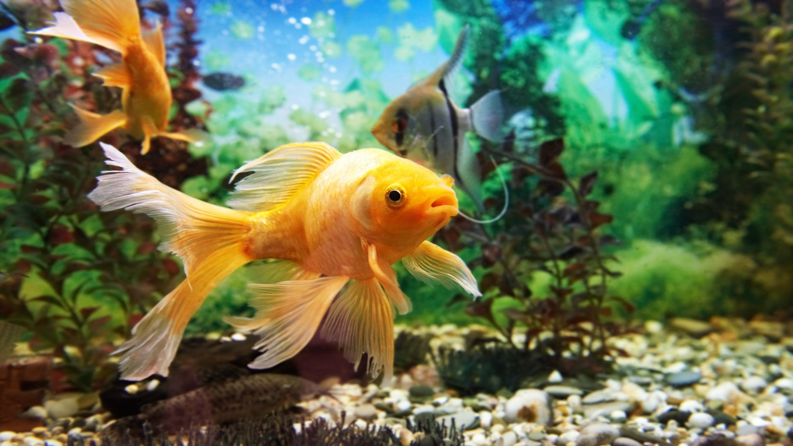 would you take your fish to the vet pender vet animal